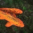 Two Koi by Heather Friedman