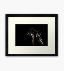 The Blood Moon And The Boab Tree Framed Print