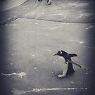 It's just a penguin by Steve Falla