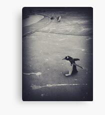 It's just a penguin Canvas Print