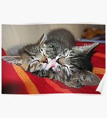 Kittens Sleeping Cuties Poster