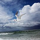 Royal Tern by EyeMagined
