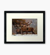 Family Portrait - Red Deer Framed Print