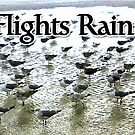 Seagull Flights Rain Delayed by EyeMagined