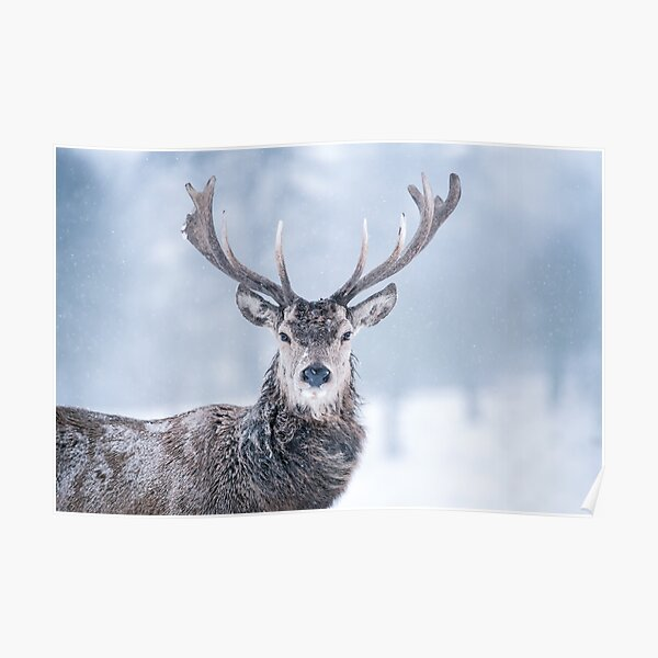 Red Deer - Blizzard Portrait Poster