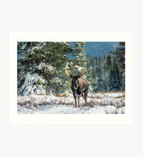 Canadian Western Bull Moose Art Print
