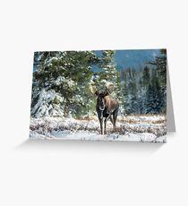 Canadian Western Bull Moose Greeting Card