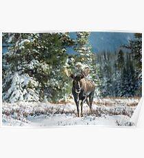 Canadian Western Bull Moose Poster