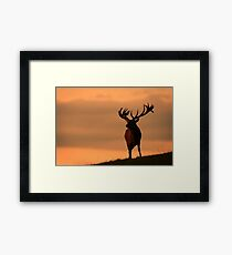 Red Deer At Night - Photographers Delight Framed Print
