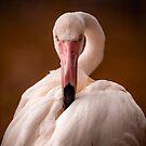 Flamingo Stare by George Wheelhouse
