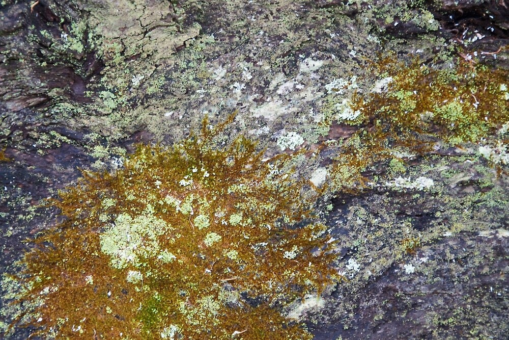 Lichen and moss on fallen tree  by Jack Bridges