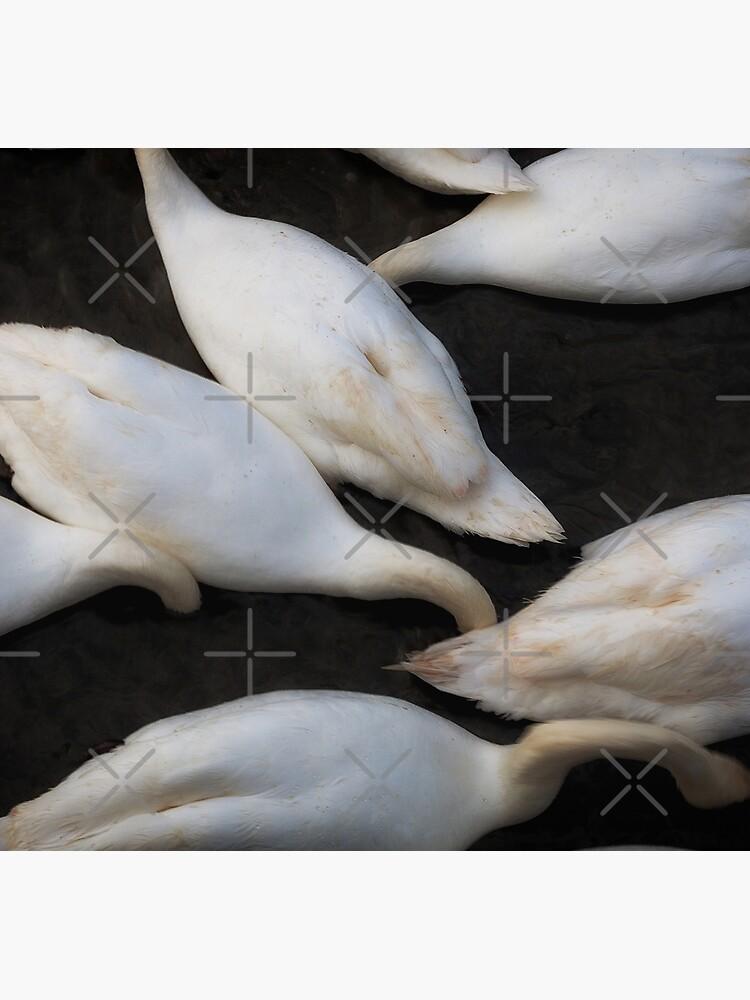kopflose Schwäne, die in einen See einziehen von leightoncollins