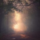 Into the Light by MiVisions