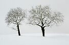 Two trees in the snow by Patrick Morand