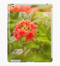 Il Tasso Rhododendron called Azalea iPad Case/Skin