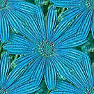 Turquoise Blue Daisy Flowers by SmilinEyes