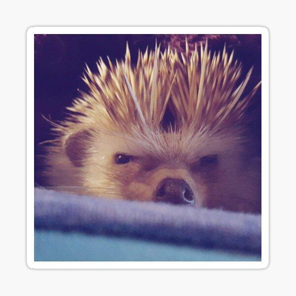 Grumpy Hedgehog Sticker