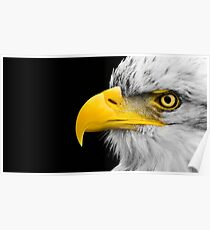 BALD EAGLE – BLACK, WHITE, AND YELLOW Poster