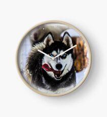 Blue Eyed Sled Dog Clock