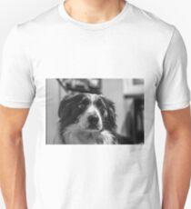 intense look of a border collie T-Shirt