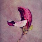 Aimee by lucyliu