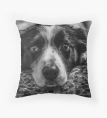 intense look of a border collie Throw Pillow
