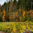 Colours Of Autumn by Terry Everson