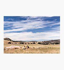 Dry meadows near Julian, CA Photographic Print