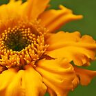 Orangey by Susan P Watkins