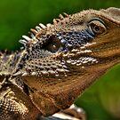 Water Dragon, Lane Cove National Park, Sydney by Erik Schlogl