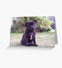 SBT puppy Greeting Card