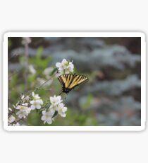 Tiger Swallowtail Butterfly 8  Sticker