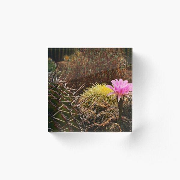 Gilgandra Beauties Acrylic Block