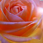 Satin petals by MarianBendeth