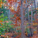 Bench among trees by MarianBendeth
