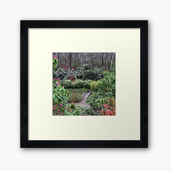 Campbell Rhododendron Gardens Framed Art Print