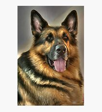 German Shepherd Photographic Print