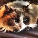 Cookie Kitty by Marija