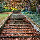 Autumnal Stairs by Dave Hare