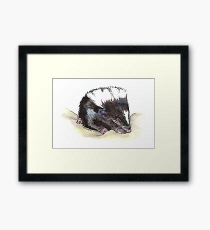 Skunk Baby Framed Print