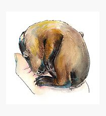 Curled up Baby Groundhog Photographic Print