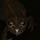 Motorbike Frog - Roleystone, Western Australia by jonolaf