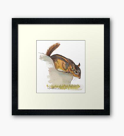 Fat Chipmunk Framed Print