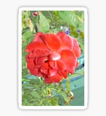 Rose of Red Sticker