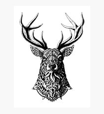 Ornate Buck Photographic Print