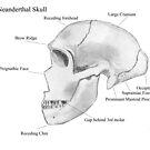 Neanderthal Skull by neil harrison