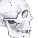 Human Skull by neil harrison
