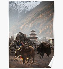 Yak heading off to get Firewood Poster