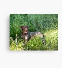 Just chilling in the green grass..... Metal Print