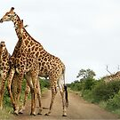 COMEPTITION - GIRAFFE – Giraffa Camelopardalis (KAMEELPERD) by Magriet Meintjes